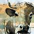 Vaches par Patrick Laroche